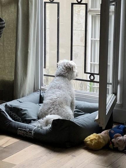 窓辺で外を見る 犬
