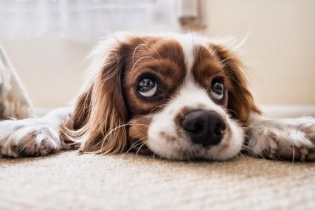 dog-flooring