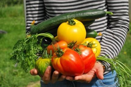 vegetables-742095_960_720